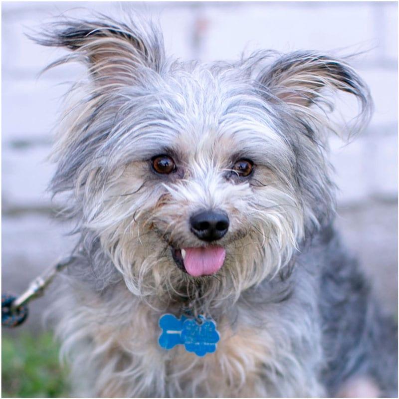 Chapo, the K9 Digital Marketing Agency Dog Companion