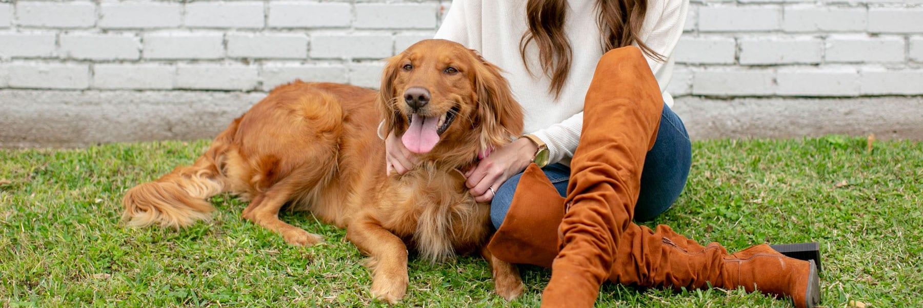 Dixie - the K9 Digital Marketing Agency Dog Companion