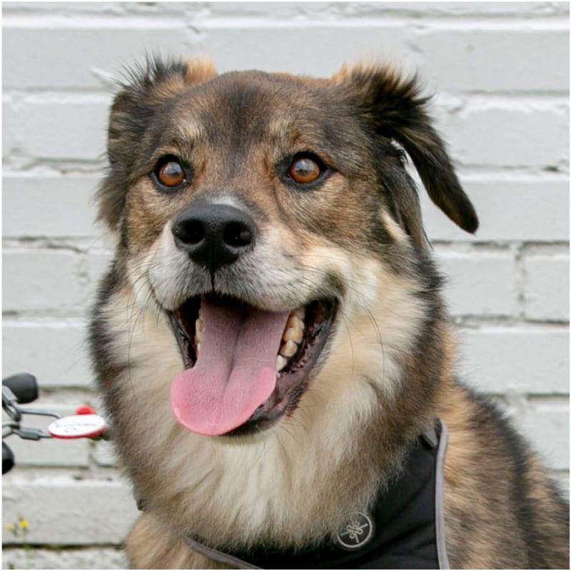 Kaiser, the K9 Digital Marketing Agency Dog Companion