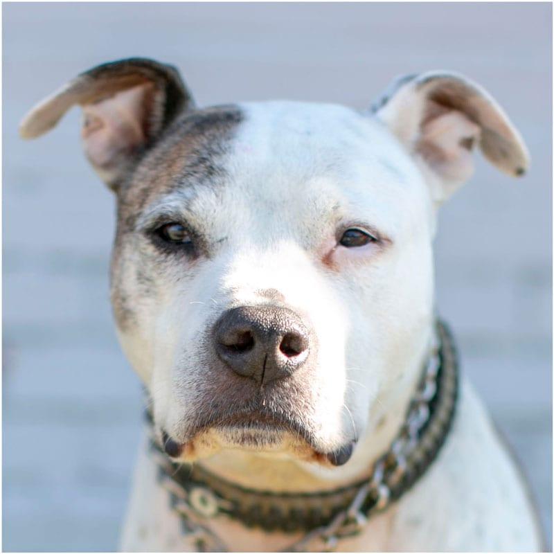 Ozzie, the K9 Digital Marketing Agency Dog Companion