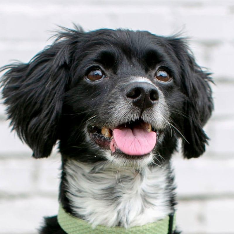 Roscoe, the K9 Digital Marketing Agency Dog Companion
